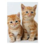 Two Adorable Kittens Postcard