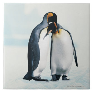 Two affectionate penguins large square tile