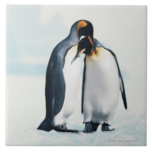 Two affectionate penguins tile