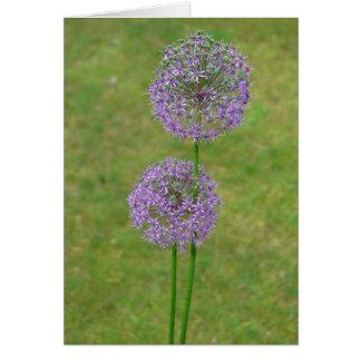Two Allium Card