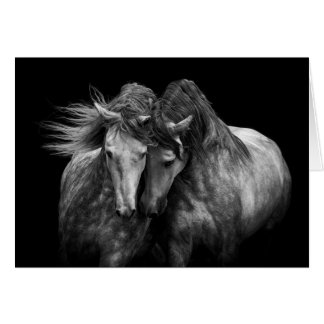 Two Andalusian Stallions - Horse Greeting Card