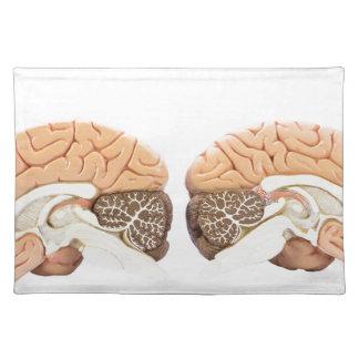 Two artificial human hemispheres placemats