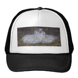 Two Baby Goats in Straw Cap