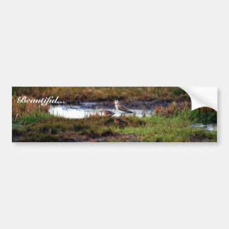 Two Bar-Tailed Godwits Bumper Sticker