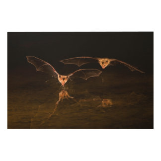 Two bats flying over water, Arizona Wood Print