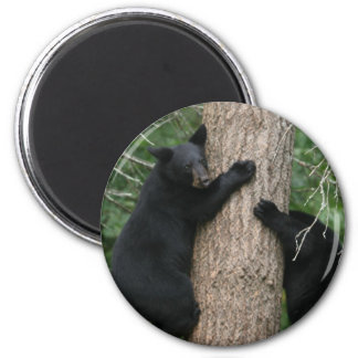 two bears in a tree magnet