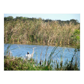 Two Birds in the Swamp Photo Print