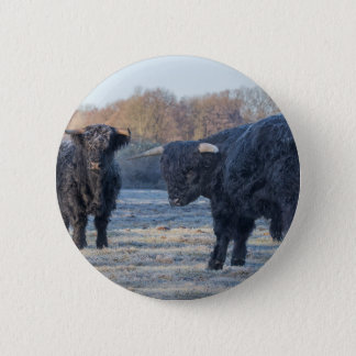 Two black scottish highlanders in frozen meadow 6 cm round badge