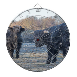 Two black scottish highlanders in frozen meadow dart board
