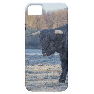 Two black scottish highlanders in frozen meadow iPhone 5 cases