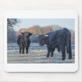 Two black scottish highlanders in frozen meadow mouse pad