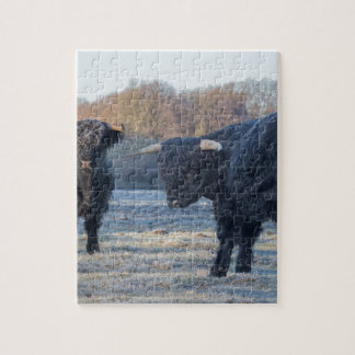 Two black scottish highlanders in frozen meadow puzzle