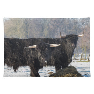 Two black scottish highlanders in winter snow placemat