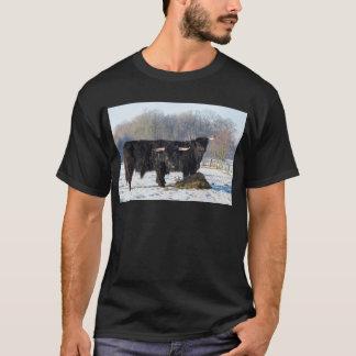 Two black scottish highlanders in winter snow T-Shirt