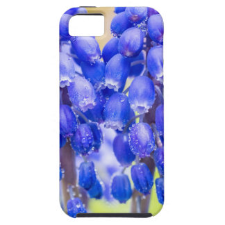 Two blue grape hyacinths in spring iPhone 5 cases