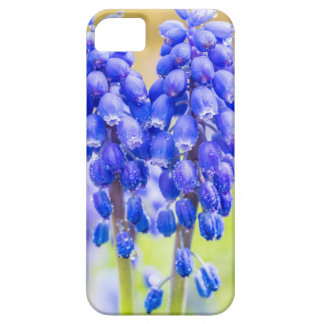 Two blue grape hyacinths in spring iPhone 5 covers