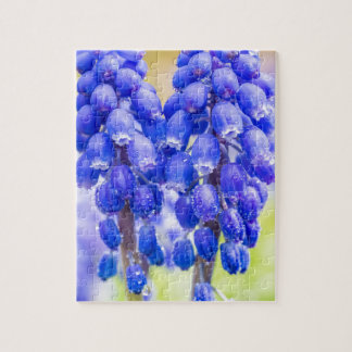 Two blue grape hyacinths in spring jigsaw puzzle
