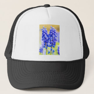 Two blue grape hyacinths in spring trucker hat