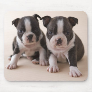 Two Boston Terrier Puppies Mouse Pad
