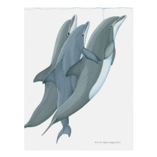 Two Bottlenosed Dolphins Postcard