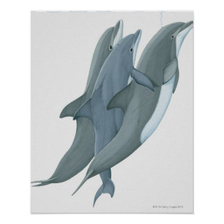 Two Bottlenosed Dolphins Poster