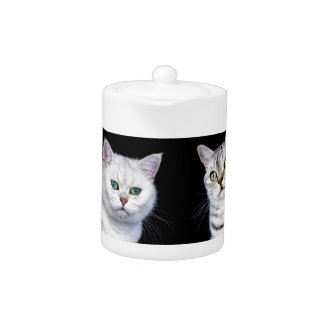 Two british short hair cats on black background