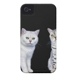 Two british short hair cats on black background Case-Mate iPhone 4 cases