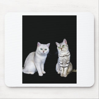 Two british short hair cats on black background mouse pad