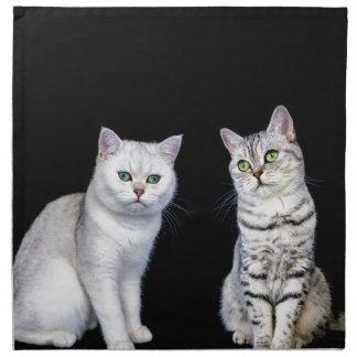 Two british short hair cats on black background napkin