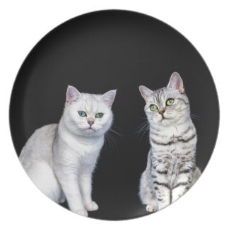 Two british short hair cats on black background party plates