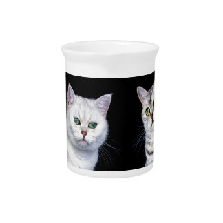 Two british short hair cats on black background pitcher