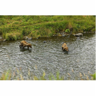 Two Brown Bear Cubs in River Photo Cut Outs