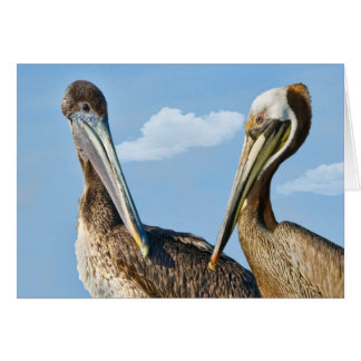 Two Brown Pelicans Note or Greeting Card