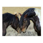 Two Brown Wild Horses Nuzzling Postcard