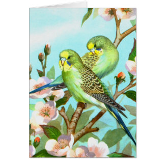 Two budgerigars card