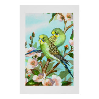 Two budgerigars poster
