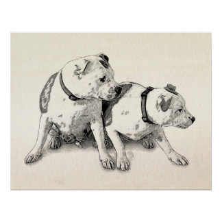 Two Bull Terriers Poster