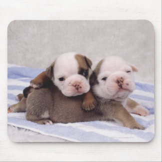 Two bulldog puppies on towel mouse pad