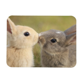 Two bunnies kissing rectangle magnet