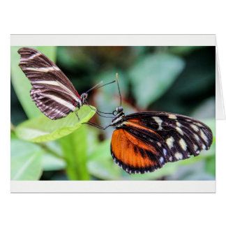 Two Butterflies Greeting Card Any Expression