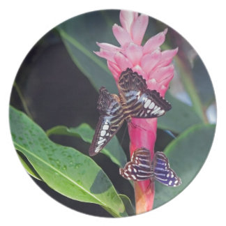 Two Butterflies on Pink Flower Plate