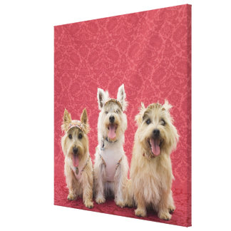 Two cairin terriers and one westie canvas print