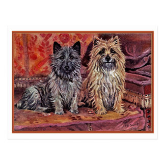 Two Cairn Terriers Postcard