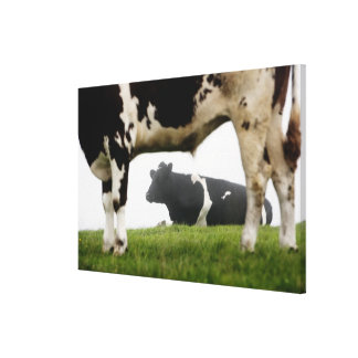 two gallery wrapped canvas