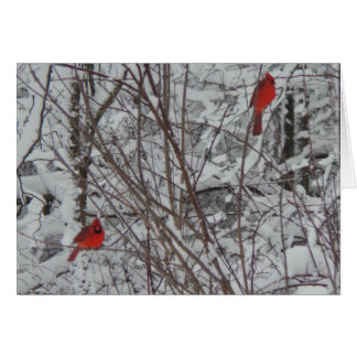 Two Cardinals 5x7 Christmas Card
