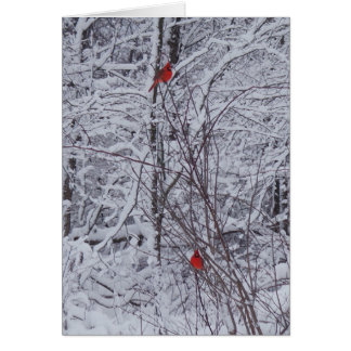 Two Cardinals 7x5 Christmas Card