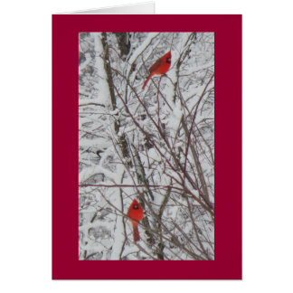 Two Cardinals Red Border 5x7 Christmas Card