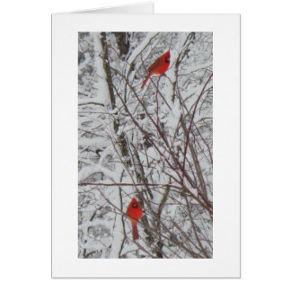 Two Cardinals White Border 5x7 Christmas Card