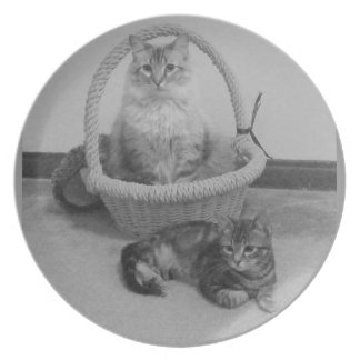 two cats black n white plate