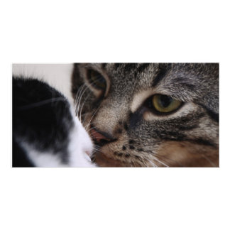 Two Cats Kissing Personalized Photo Card